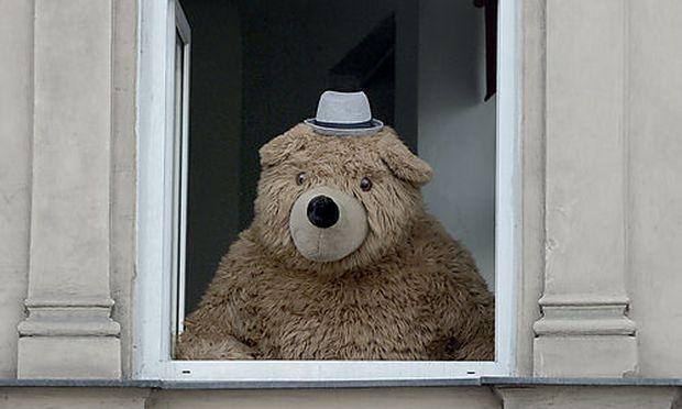 Der Wiener ''Gürtelbär'', aufgenommen im Juli