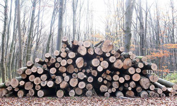 Der Borkenkäfer hat das Schadholz in Österreich in die Höhe schnellen lassen.