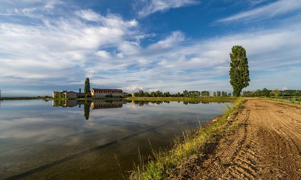 Provinz Novara: unzählige rechteckige Reisfelder.