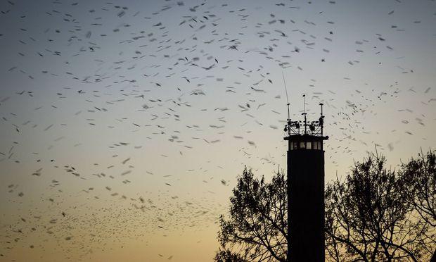 Das Magnetfeld der Erde und die Sterne helfen Vögeln, ans Ziel zu kommen.