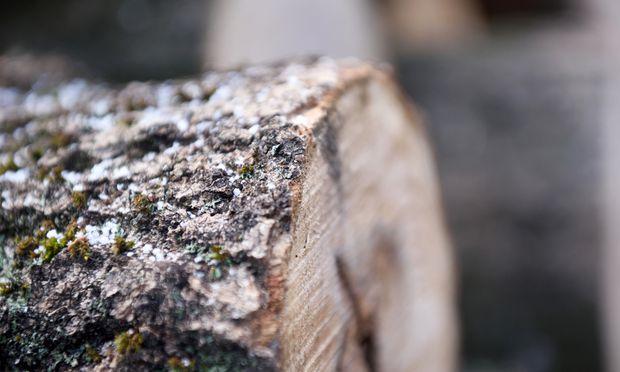 Ein Baum fiel auf das Fahrzeug und beschädigte es. Der Versuch, dafür von der Waldeigentümerin Schadenersatz zu bekommen, scheiterte nun aber vor dem Obersten Gerichtshof.