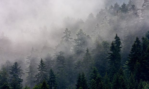 """""""Das Ausmaß der Klimaschäden ist gewaltig"""", sagt Rudolf Freidhager, Vorstand der Bundesforste."""