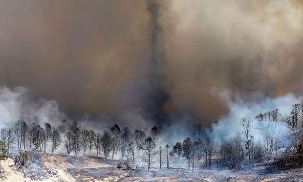 Verbrannte Wälder in Kalifornien.