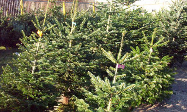 Wo Stand Der Erste Weihnachtsbaum.Wo Stand Der Erste Christbaum Wiens Diepresse Com