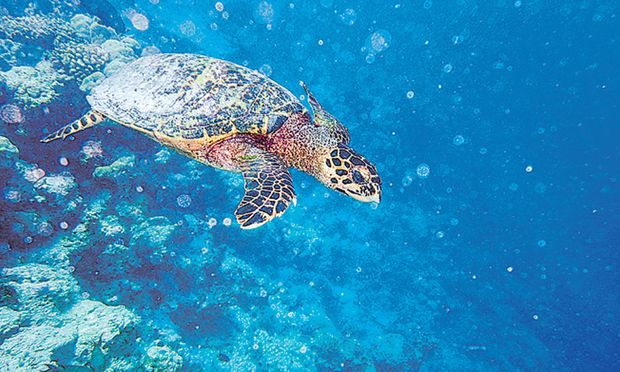 Schnorcheln Aug in Aug mit einer Wasserschildkröte