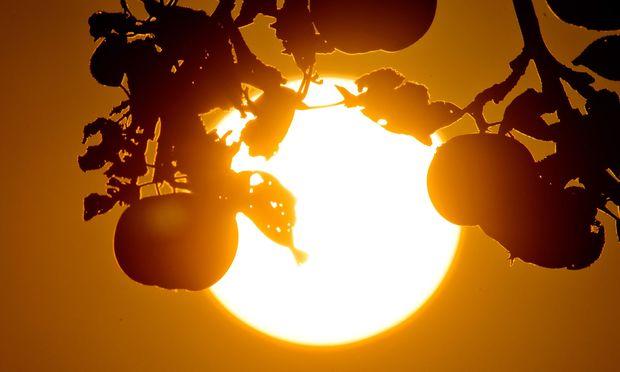 Sonne und Apfelbaum