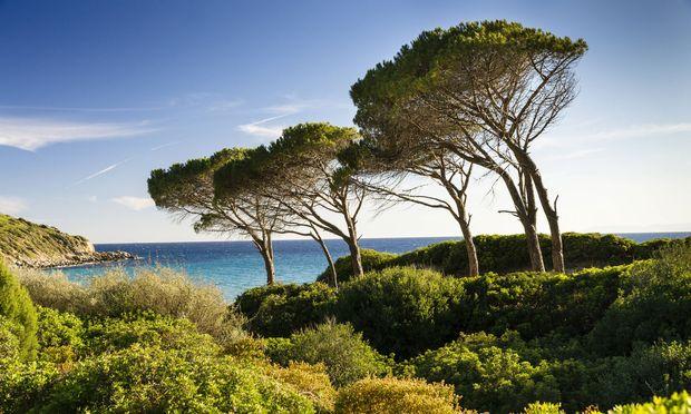 Klassischer Anblick: Pinien am Golf von Cagliari.