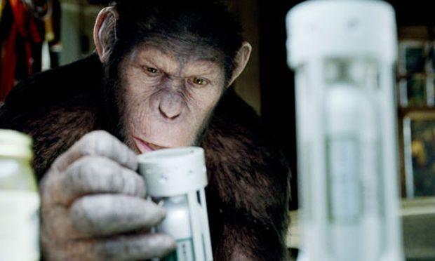Kino Revolte Affen beginnt