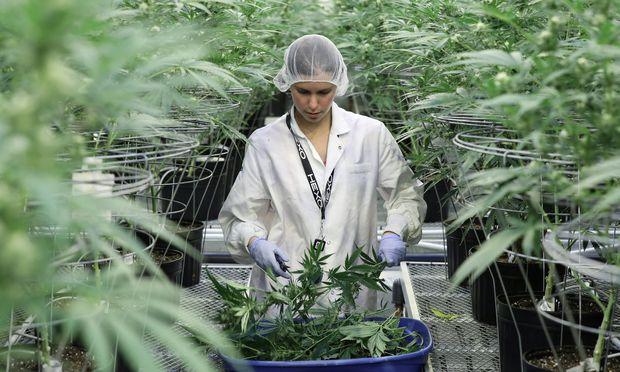 Cannabis: Kanada legalisiert vollständig den Verkauf von Marihuana