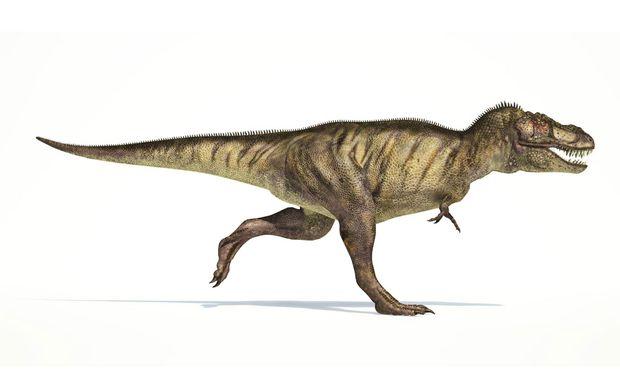 Ein Modell des Tyrannosaurus rex