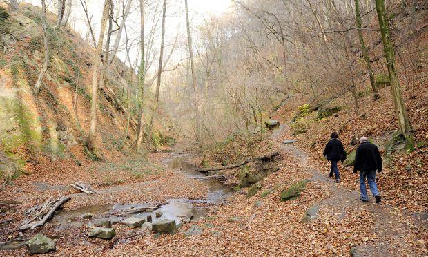 Sehr idyllisch, sehr entspannt: Wandern in der Hagenbachklamm im Wienerwald.