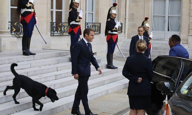 Macron und sein neuer Hund Nemo heißen Mahamadou Issoufou, Präsident von Niger, im Éysée-Palast willkommen.
