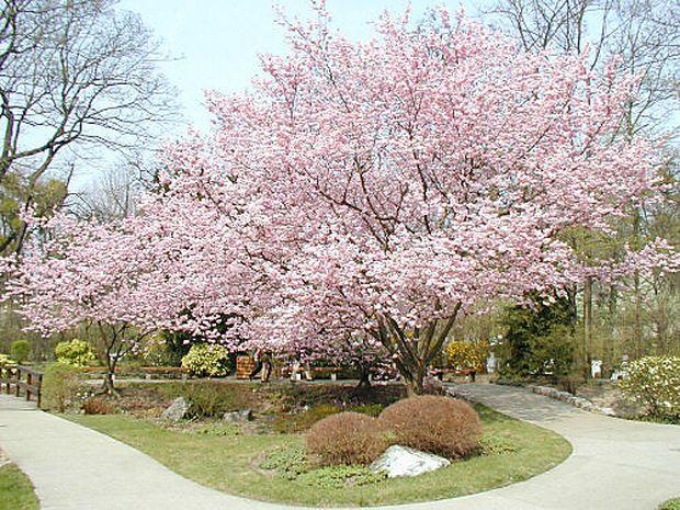 Kleinod in Döbling: Setagaya Park