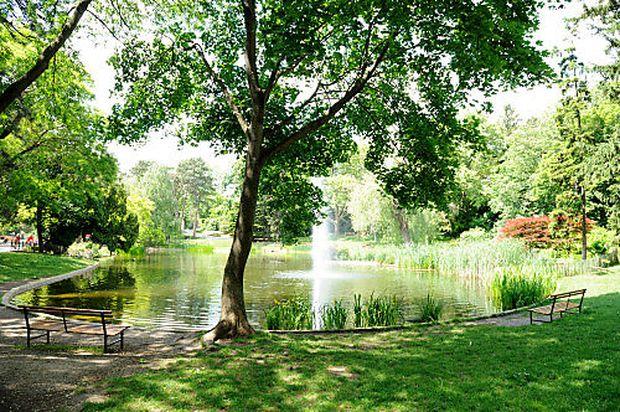 Der Türkenschanzpark im Sommer.
