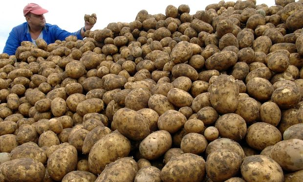 Kartoffelernte in Brandenburg