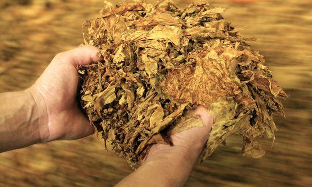 Unternehmen Philip Morris International ITAR TASS 58 KRASNODAR RUSSIA NOVEMBER 14 At a tobacco