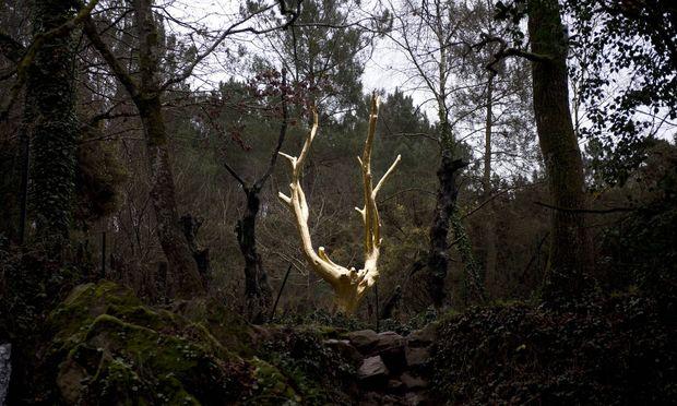 """Im Wald """"Broceliande"""" in der Bretagne soll Merlin wohnen, der goldene Baum erinnert an ihn."""