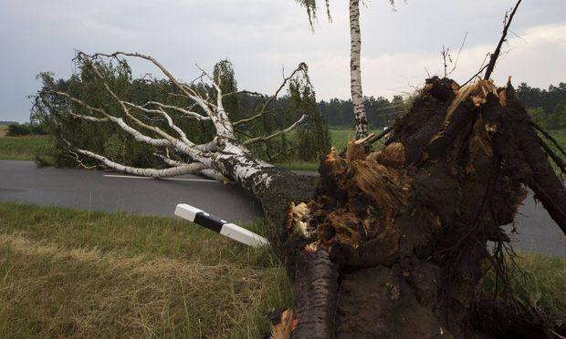 Ein umgekippter Baum nach dem Sturm auf der Strasze Kreisstrasze K26 zwischen Zicherie und Tuelau Fahr