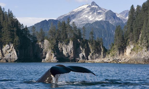 Alaskan Explorer Eiswasser Park