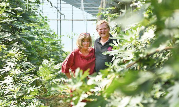 Feigen. Ursula Kujal und Harald Thiesz auf ihrem Simmeringer  Biofeigenhof.