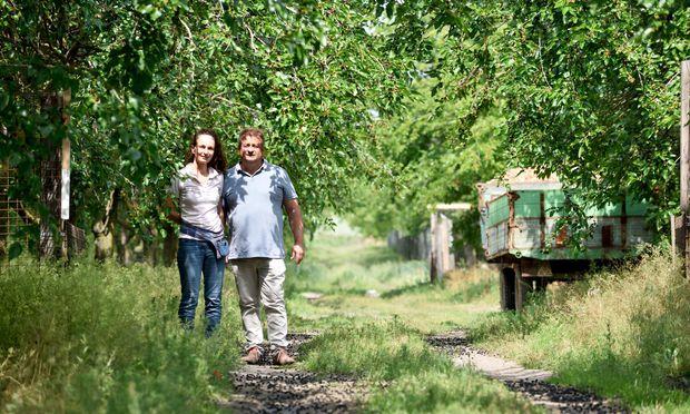 Priska und Erich Stekovics in ihrem Maulbeergarten. Es gibt schwarze, rosa und weiße Beeren. Am Baum: unreife und reife zugleich.