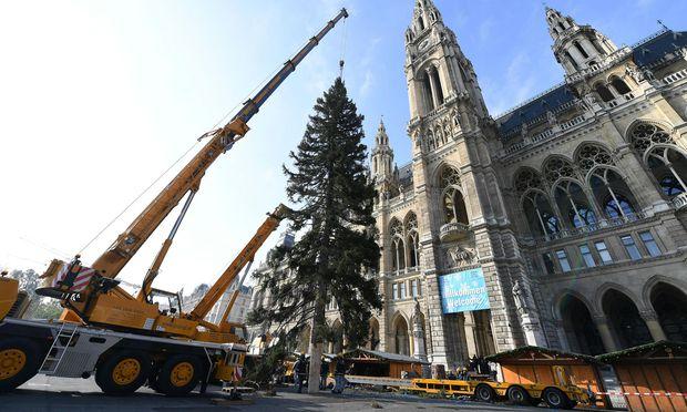 Der Christbaum am Wiener Rathausplatz wurde am Mittwoch aufgestellt - und sorgt seitdem für Diskussionen in Boulevardmedien.