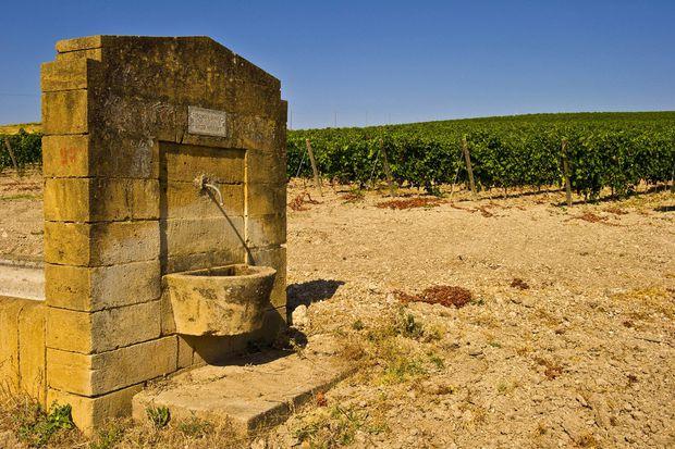 Ein Weingut in Sizilien