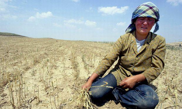 Chinas Weizenguertel verdorrt