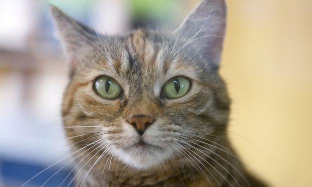 Katze kam ins Tierheim.