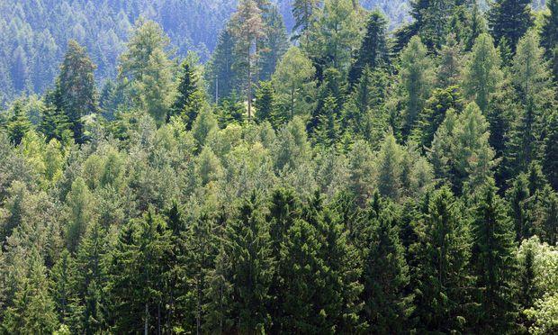 Schweighofer verkauft Waldgrundstücke in Rumänien.