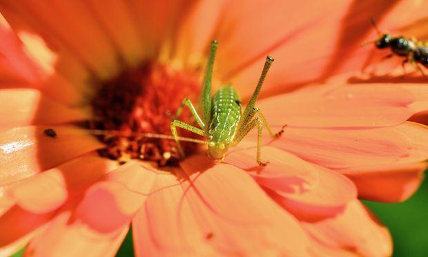 Auch Hobbygärtner können etwas für die Biodiversität tun.