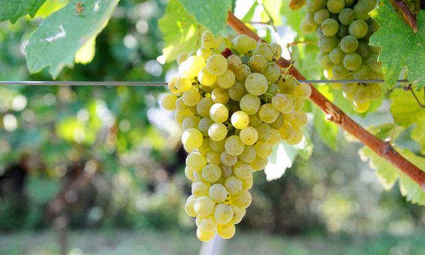 der Wein-Investmentfonds