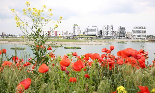 Stadt und Land treffen hier, in Aspern, friedlich aufeinander.