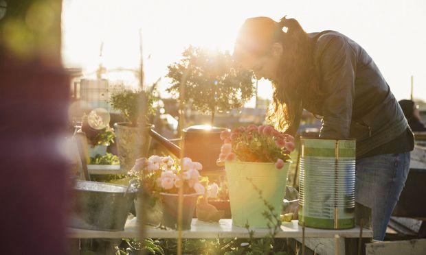 Hobbygärtner zieht es jetzt nach draußen – egal, ob in den Garten, auf den Balkon oder die Terrasse. / Bild: Getty Images