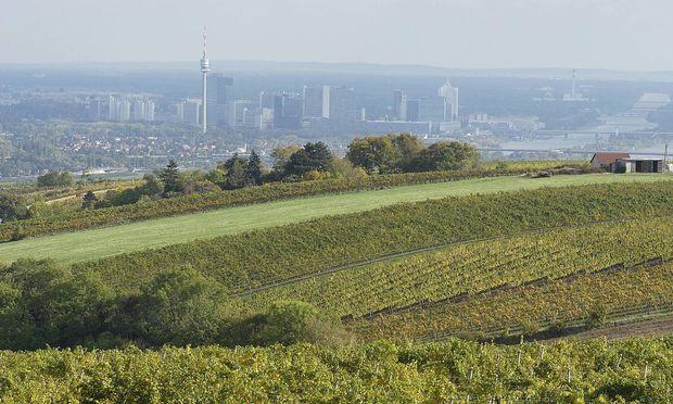 """Die """"Ersten Lagen"""" befinden sich am Nussberg, in Grinzing, am Bisamberg und am Mauerberg."""