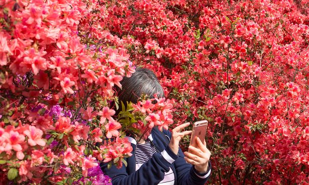 Woman holds her mobile phone as she stands amid flowers at the South China Botanical Garden in Guangzhou