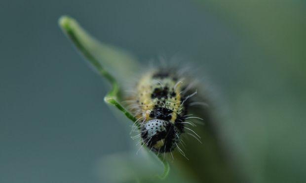 Die Passagen über Schädlinge und andere Gartenbewohner gehören zu den vergnüglichsten.