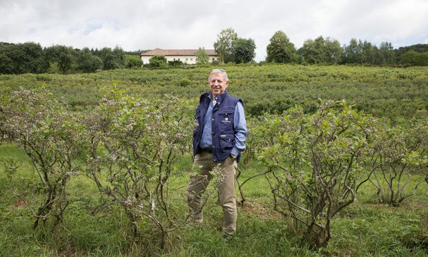 Klaus Schmied betreibt am Rande von Linz seinen Beerenberg – und verkauft hier Bio-Heidelbeeren und verarbeitete Produkte.