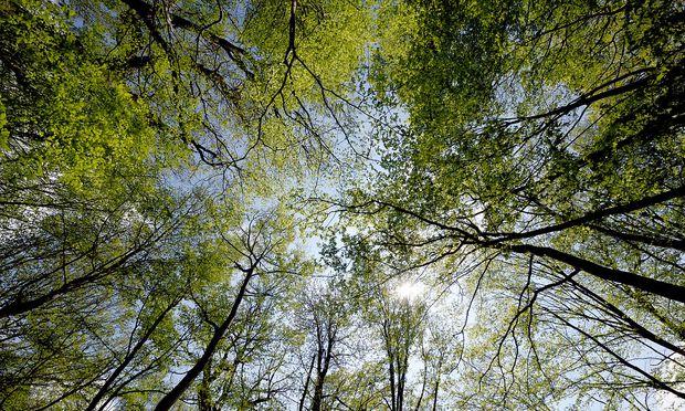 Der Laubwald übersteht den Klimawandel besser.