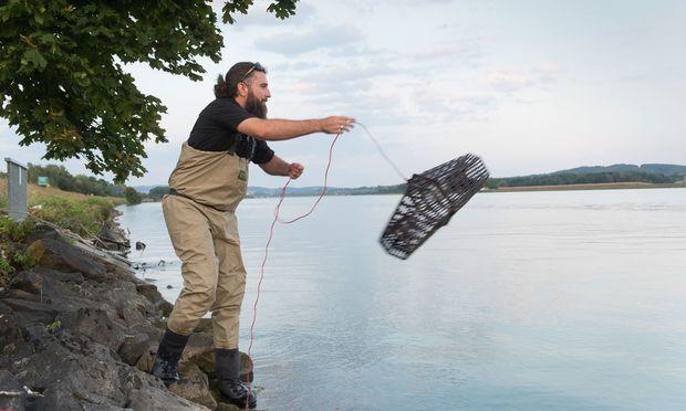 Weitwurf.  Andreas Haas wirft die Reuse samt Lockfutter in die Donau.