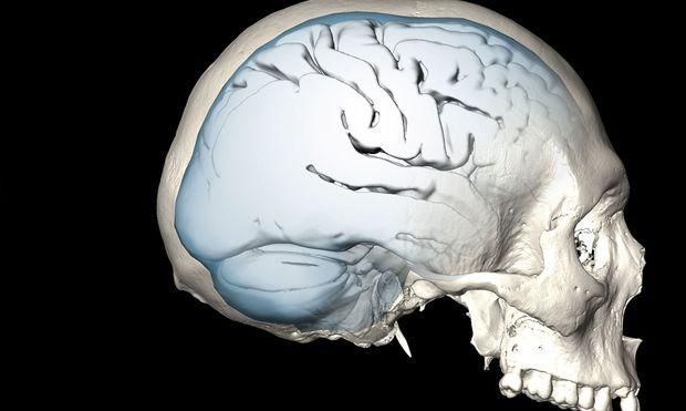Wenn wir das Sprechen lernen, nutzen wir Fähigkeiten des Gehirns, die nicht für das Sprechen, sondern früher entwickelt wurden.