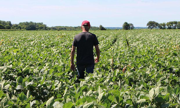 Trump hilft Bauern im Handelsstreit mit 12 Milliarden Dollar