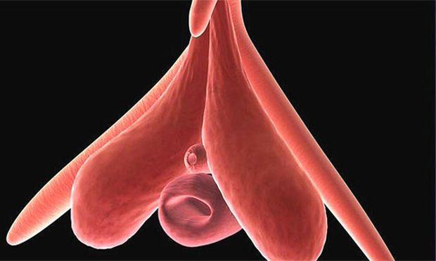''Klitoris, die schöne Unbekannte'', Sendetermin auf ARTE: 23. 11. 2007)