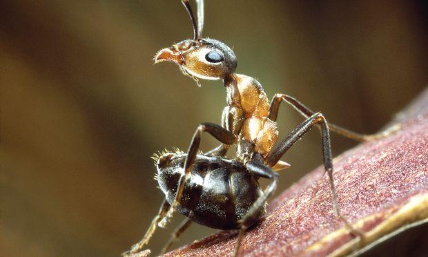 'Universum', 'Triumph des Lebens - Das Reich der Insekten.'