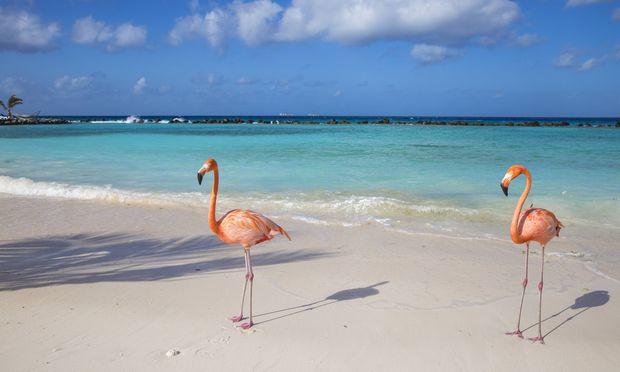 Flamingos auf Renaissance Island.