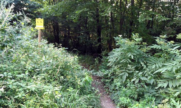 Hier beginnt der Shared Trail vom Dreihufeisenberg hinunter zum Laaber Tor