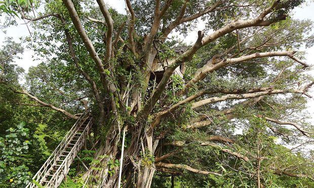 Baumhaus. Etwa acht Quadratmeter, ein breites Doppelbett, ein Moskitonetz,  WC hinterm Vorhang: die  Volcano Tree Venture Bungalows auf Vanuato im Südpazifik.