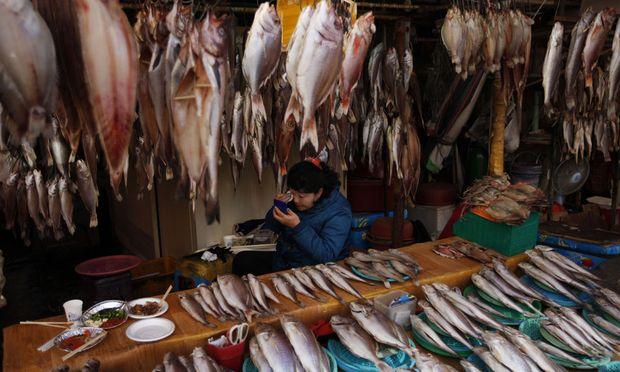 Meer. Noryangjin ist der Umschlagplatz für Fisch in den abenteuerlichsten Formen.