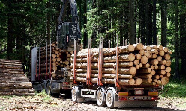 Für eine Megawattstunde Ökostrom muss eine Tonne Holz verheizt werden.