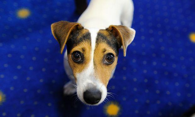 Partnersuche für hunde